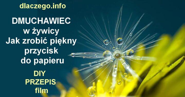 dlaczego.info-DMUCHAWIEC-W-ZYWICY-BIŻUTERIA
